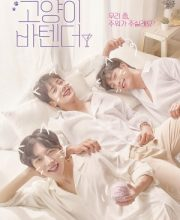 Watch Drama Cat's Bar (2019) Eng Sub
