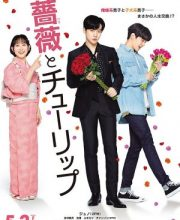 Watch Drama A Rose and a Tulip Eng Sub